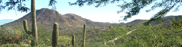 photo of Arizona cactus landscape
